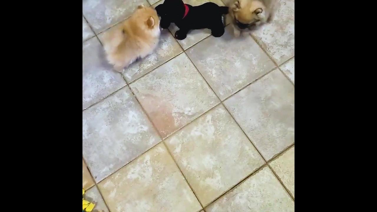 Cachorrinhos ganham amiguinho de mentira