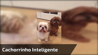 Cachorrinhos Mais Fofinhos Que Você Vai Ver Hoje, Olha Só Que Inteligente!