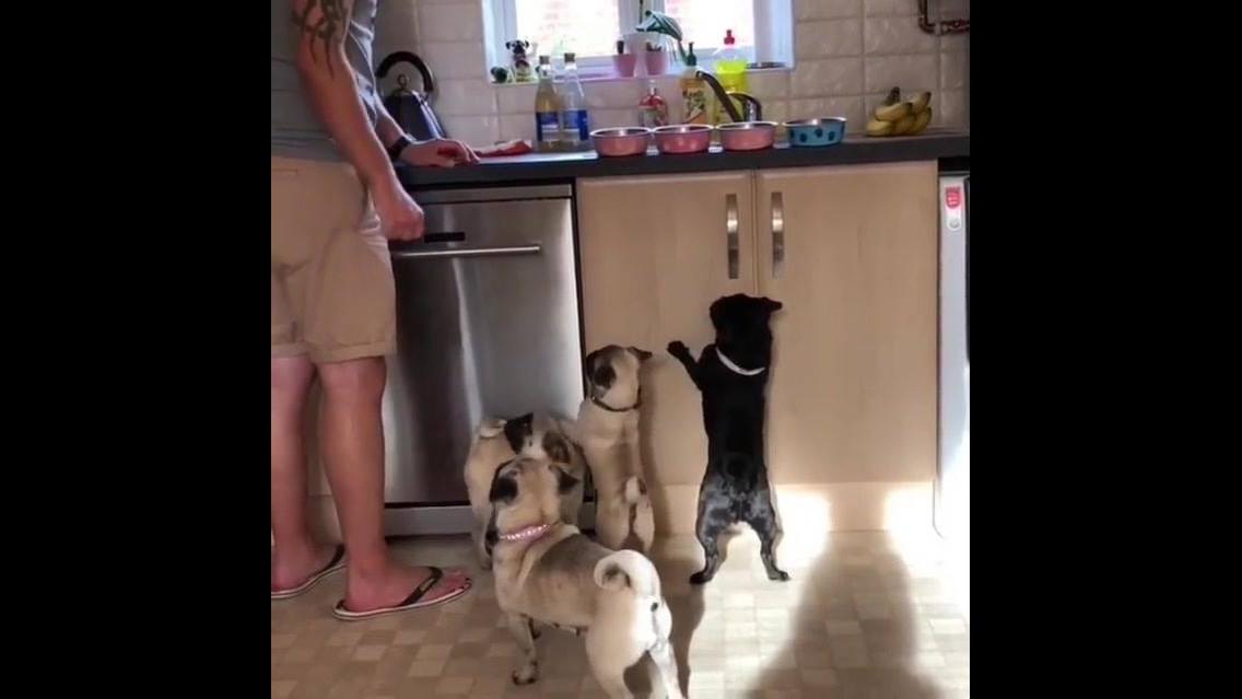 Cachorrinhos na hora do almoço