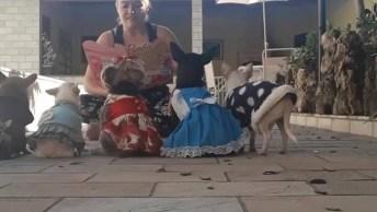 Cachorrinhos Ouvindo Historinha, Olha Só Como Eles São Comportados!