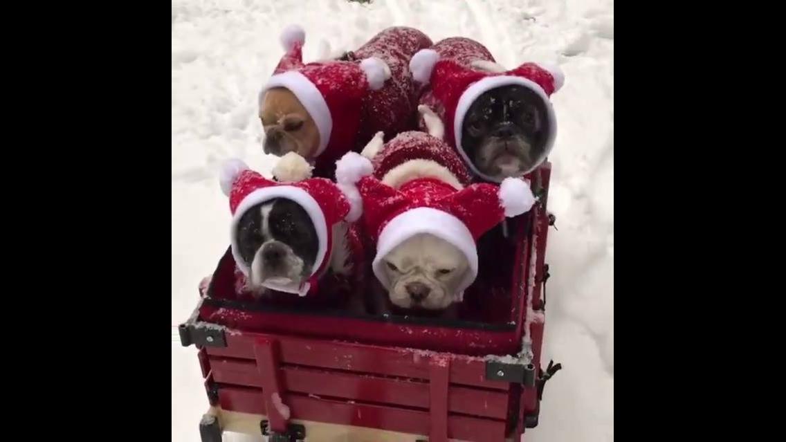 Cachorrinhos passeando em carrinho na neve com roupinhas quentinhas