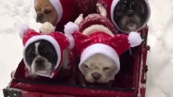Cachorrinhos Passeando Em Carrinho Na Neve Com Roupinhas Quentinhas!