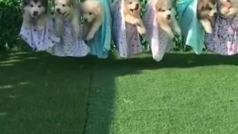 Cachorrinhos Pendurados No Varal, Veja Como Eles São Fofos E Quietinhos!
