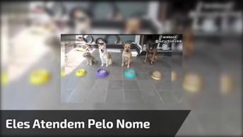 Cachorrinhos Que Atendem Pelo Nome, Olha Só Como São Inteligentes!