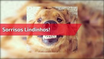 Cachorrinhos Que Sabem Sorrir, Olha Só Estas Carinhas Fofas!