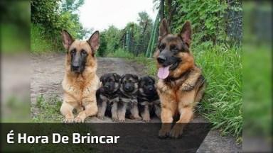 Cachorrinhos Querem Mamar Mas A Mamãe Quer Brincar, Confira!