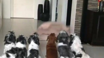 Cachorrinhos Reagindo A Mágica De Desaparecimento, Olha Só Que Fofinhos!