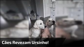 Cachorrinhos Revezam A Hora De Segurar O Ursinho Para Ganhar Petiscos!