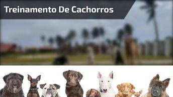 Cachorrinhos Sendo Treinados, Olha Só Como São Inteligentes Estas Criaturinhas!