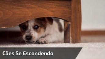 Cachorrinhos Tímidos, Olha Só Como Eles Se Escondem, É Muito Fofinho!