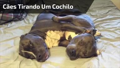 Cachorrinhos Tirando Um Cochilo, Olha Só A Carinha Deles Que Lindos!