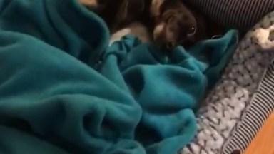Cachorrinhos Tirando Uma Soneca, Olha Só Como Estão Quietinhos!