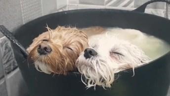Cachorrinhos Tomando Banho, Olha Só Que Fofuras, Estão Só Relaxando!