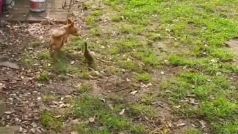 Cachorrinhos Versus Aves, Olha Só O Que Esta Galerinha Apronta!