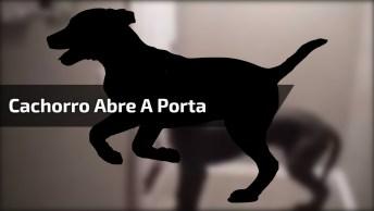 Cachorro Abre A Porta Sozinho! Veja Que Inteligente Este Animal!