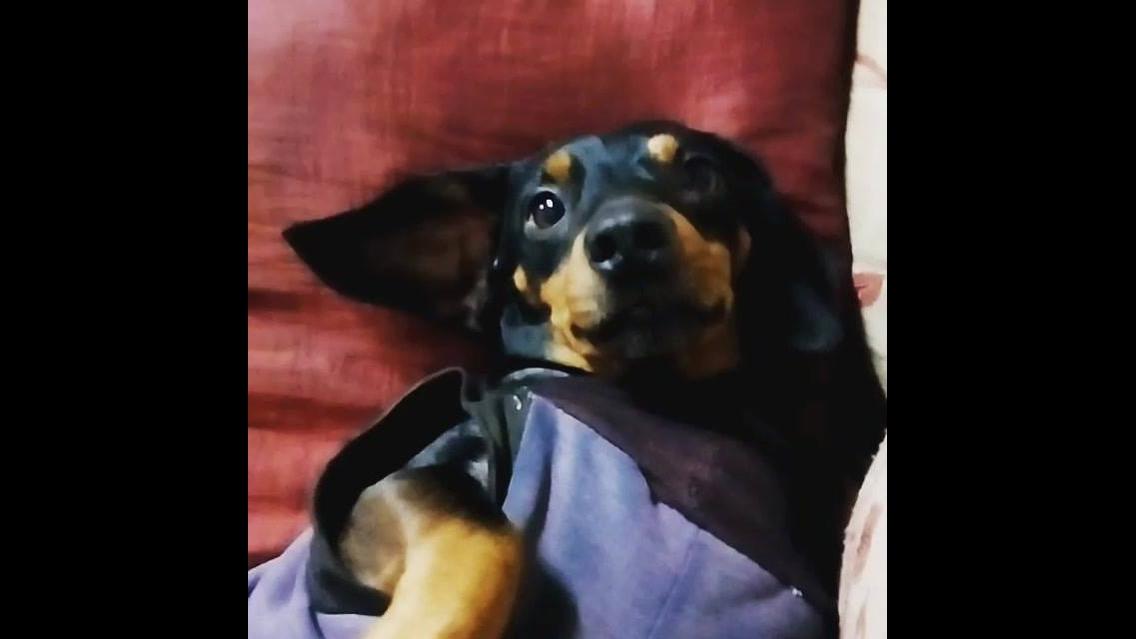 Cachorro acaba de acordar e fica olhando para o nada