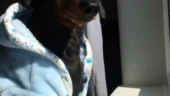 Cachorro Acabando De Acordar, Com Direito De Roupão E Café Na Caneca!
