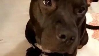 Cachorro Adora Carinho Com Pincel De Maquiagem, Veja Como Ele Fica Quietinho!