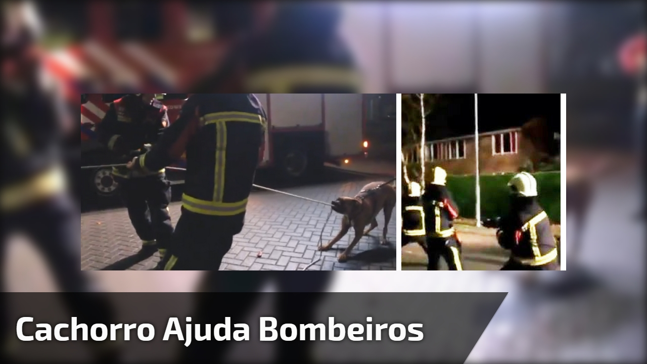 Cachorro ajuda bombeiros
