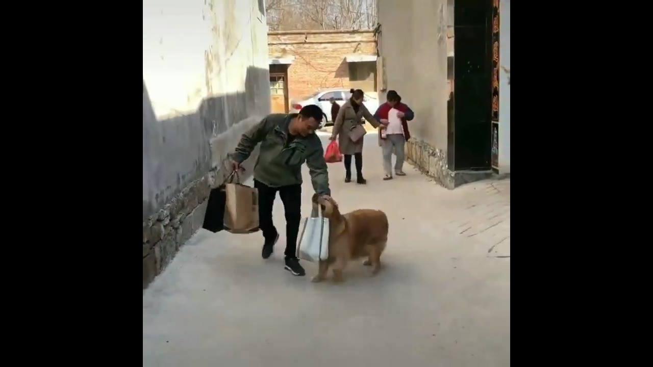 Cachorro ajudando a carregar sacolas