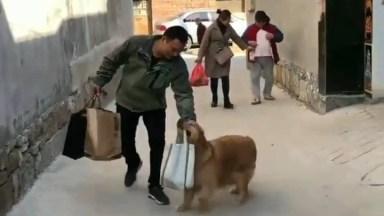 Cachorro Ajudando A Carregar Sacolas, Olha Só Que Amiguinho Prestativo!
