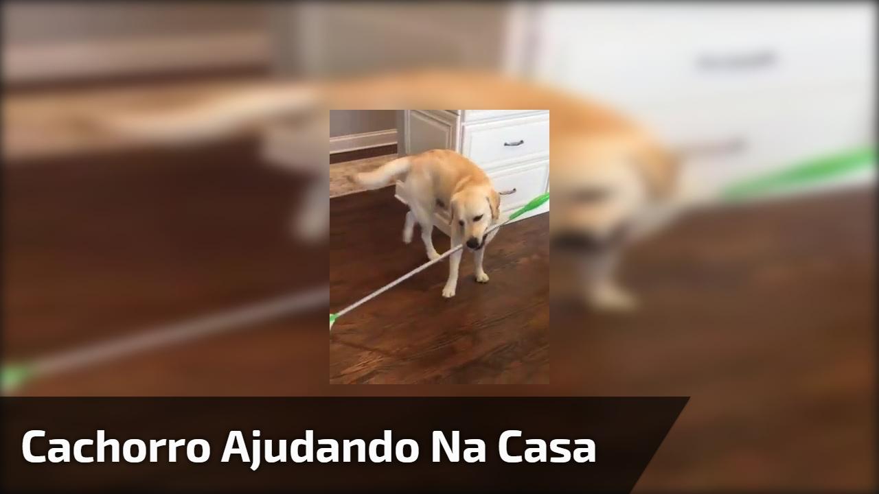 Cachorro ajudando na casa