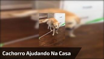 Cachorro Ajudando A Passar Pano Na Casa - Será Que Esta Ficando Tudo Limpinho?