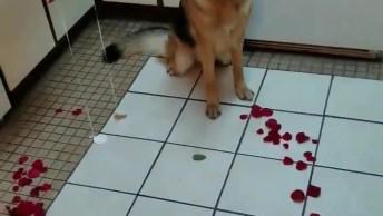 Cachorro Ajudando Na Hora De Fazer Surpresa Para Namorado!