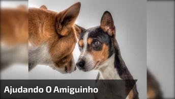 Cachorro Ajudando O Outro A Sair Da Onde Estava, Que Cena Linda!