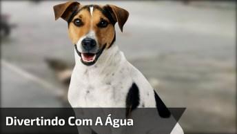 Cachorro Alegre Se Divertindo Com A Água Da Chuva Que Esta Caindo Das Calhas!
