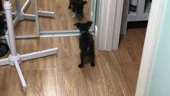 Cachorro Alterado Por Conta Da Sua Imagem No Espelho, Ele É Uma Fofura!