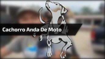 Cachorro Anda De Moto Com Seu Dono, Ele O Leva Para Todo Lugar!