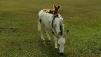 Cachorro Andando A Cavalo, Você Vai Adorar Essa Cena, Confira!