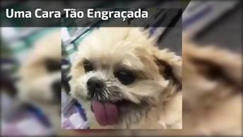 Cachorro Andando Com A Língua De Fora, Ele Tem Uma Cara Tão Engraçada Hahaha!