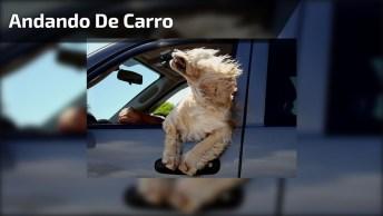 Cachorro Andando Coma Cabeça Na Janela Do Carro, Que Liberdade É Essa Hahaha!