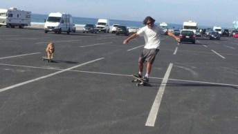 Cachorro Andando De Skate Com Seu Dono, Ele O Segue Para Todo Lado!