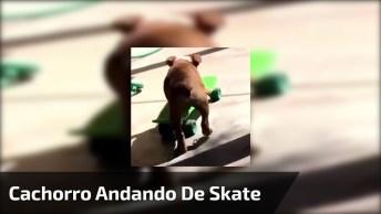 Cachorro Andando De Skate, Olha Só Que Coisinha Mais Fofinha!