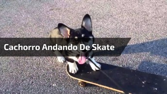Cachorro Andando De Skate, Veja Que Fofura A Perninha Dele!