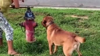 Cachorro Ansioso Para Começar A Bagunça Com Água, Que Divertido!