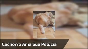 Cachorro Apaixonado Pelo Seu Ursinho De Pelúcia, Uma Fofura!