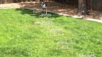 Cachorro Aprendendo A Caminhar Por Obstáculos, Ele Foi Esperto!
