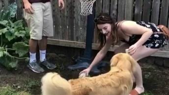 Cachorro Aprendendo A Fazer Cesta Com A Bola, Confira E Compartilhe!