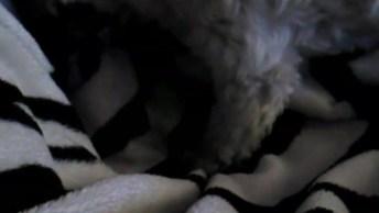 Cachorro Arrumando Um Jeito Confortável Para Deitar, É Uma Fofura!