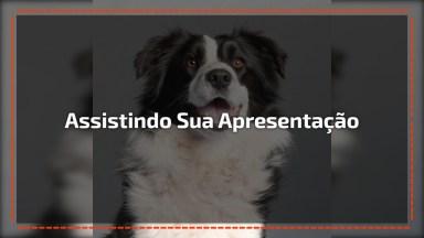 Cachorro Assistindo Sua Apresentação De Outro Cachorro Na Tv!