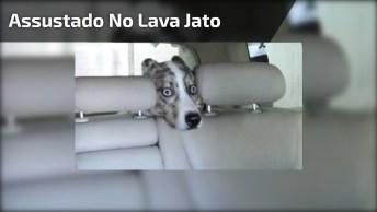 Cachorro Assustado No Lava Jato, É De Dar Dó A Carinha Dele!