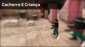 Cachorro 'Ataca' Criança Para Pegar Algo Que Esta Na Sua Mão, Mas Foi Fofo. . .