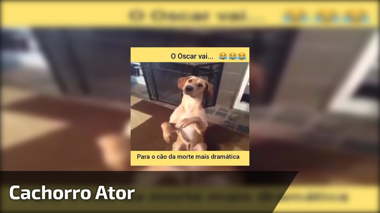 Cachorro ator