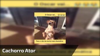 Cachorro Ator, Olha Só Como Ele Dramatiza Bem! Muito Fofo, Confira!