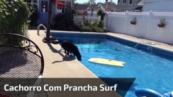 Cachorro Atravessando A Piscina Com Uma Prancha De Surf, Kkk!