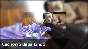 Cachorro Babá, Mais Um Para Entrar Na Lista De Melhor Babá De Todos!